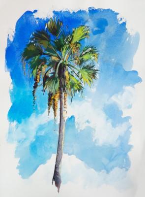 Palmier-cocotiers
